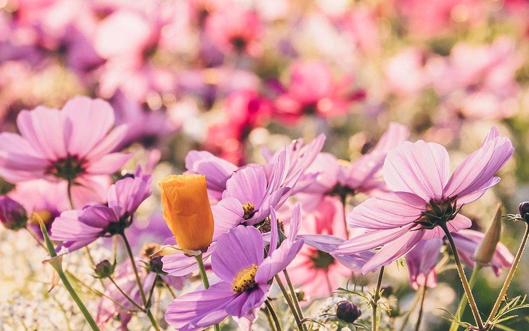 Yoga for the Seasons- Immune Health